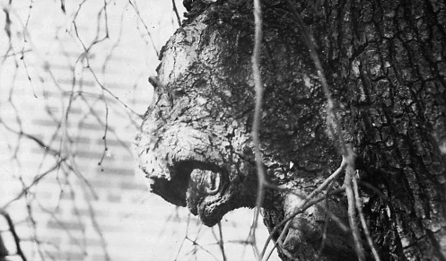 lion tree.jpg